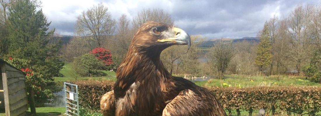Kintail Birds of Prey, Argyll