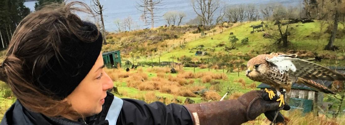 Kintail Birds of Prey, Argyll