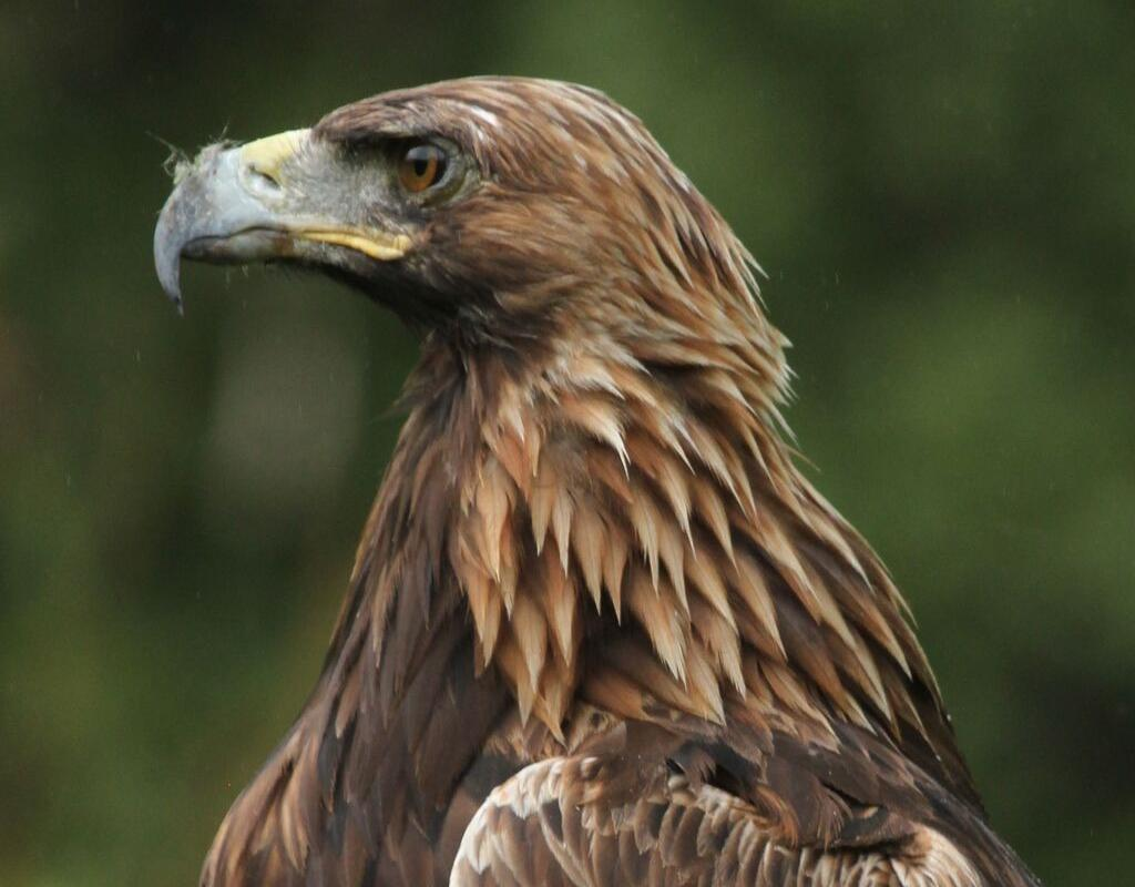Meet The Birds Kintail Birds Of Prey Argyll